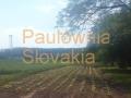 skolka stretavka4